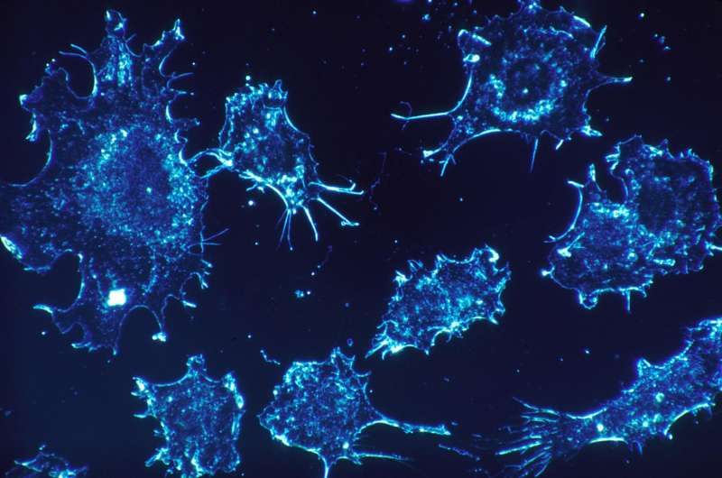 Study finds protein aggregation inhibitor can be used to develop cancer therapies