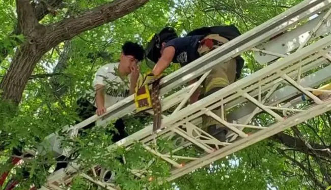 He Climbed A Tree To Rescue Cat. Firefighters Had To Rescue Him